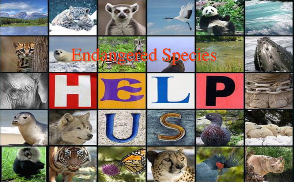 speech endangered animals Print this endangered animals classification poster out and display it in your classroom when studying endangered animals information includes.